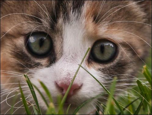 L'homme possède environs 5 millions de cellules olfactives. Combien le chat en possède-t-il ?