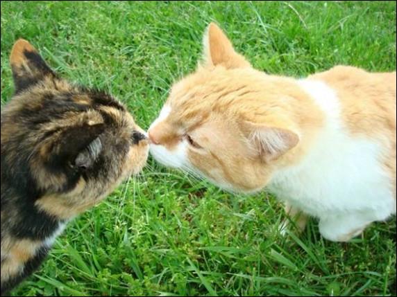 Que signifie le fait qu'un chat ait le nez sec ?