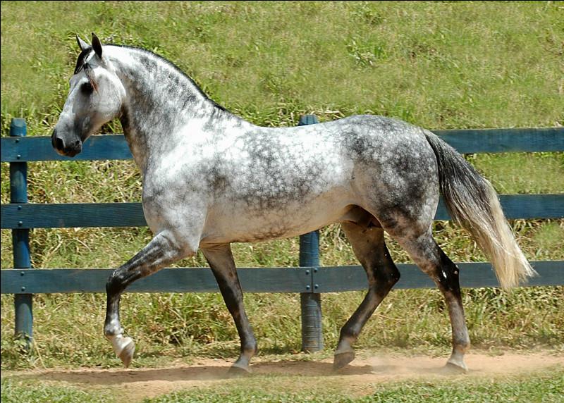 Réviser les robes des chevaux