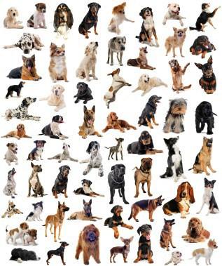 Connais-tu bien les races de chien ?