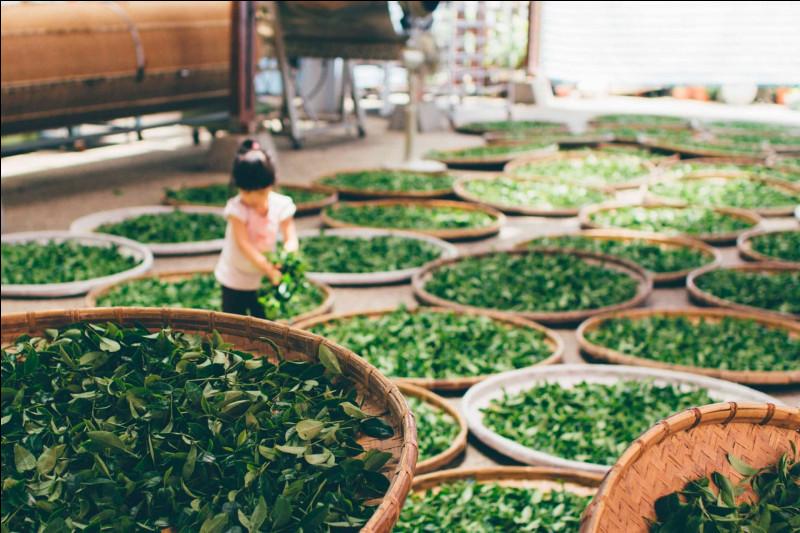 Quel est le processus chimique qui provoque le noircissement des feuilles de thé et qui confère aussi un goût et un arôme particulier au thé ?