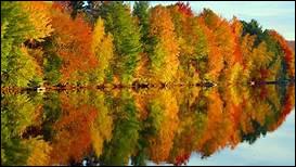 """On reste dans le thème ! Comment dit-on """"automne"""" en anglais ?"""