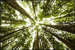"""On a fait les feuilles maintenant on passe aux arbres ! Comment dit-on """"arbres"""" ?"""