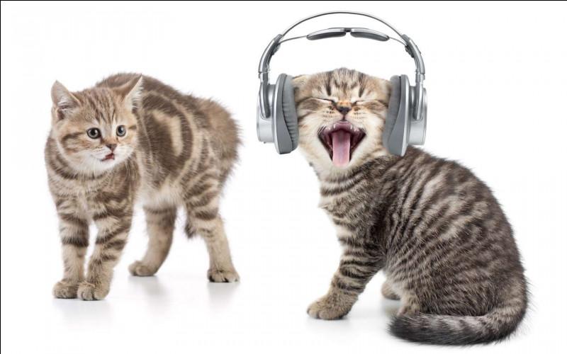 Passons au miaulement des chats, première question : combien de sons, les chats peuvent-ils émettre ?