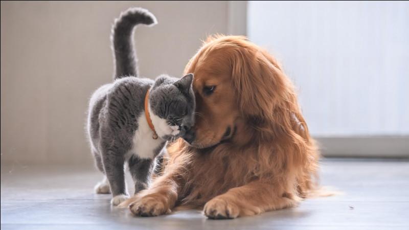 Bon pour finir, les chats ont-ils des sentiments ?