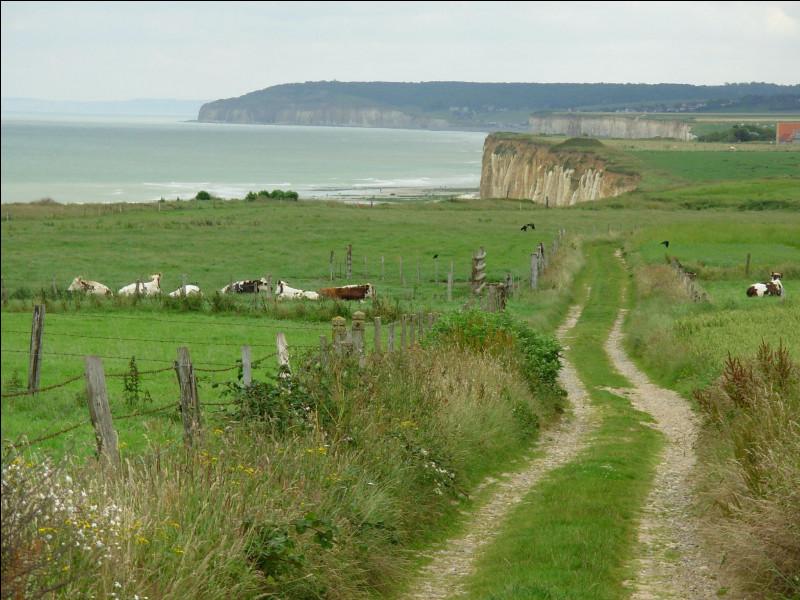 Cette région, caractérisée par ses clos-masure entourés de haies, est un plateau calcaire qui s'étend au nord de la Seine et se termine au nord et à l'ouest par des falaises dominant la Manche ; c'est le ...