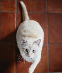 Ce chat est...