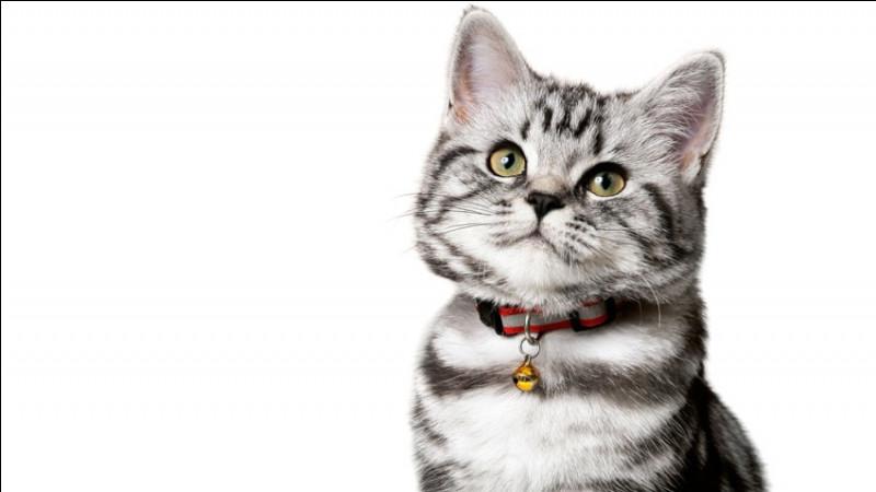 S'il cligne des yeux avec les oreilles toujours tendues vers l'avant, alors votre chat est...