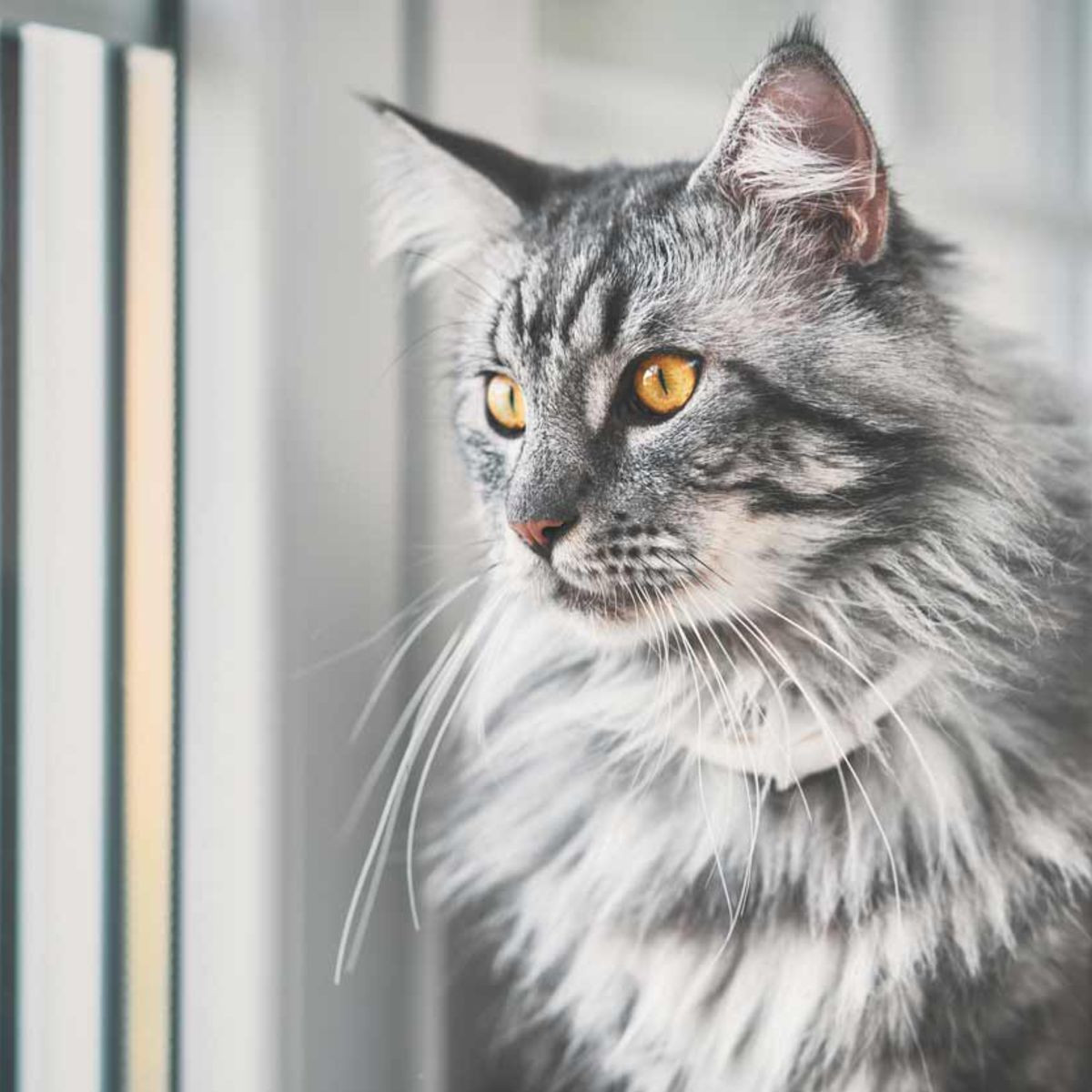 Comprendre et apprendre le langage des chats