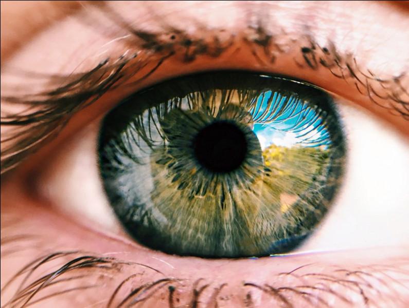 Tes yeux sont :