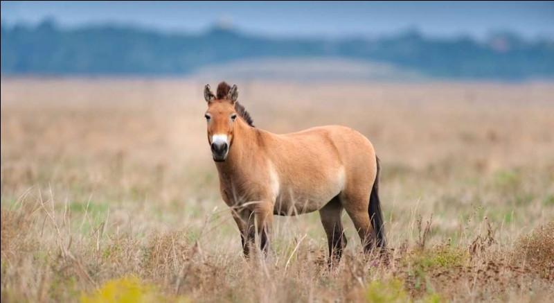 Il existe une race de cheval vieille de 15 000 ans :
