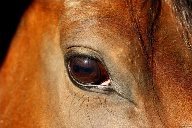Comme l'Homme, le cheval voit mal la nuit :