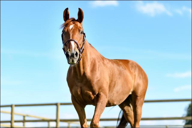L'espérance de vie d'un cheval est d'environ 15 ans :
