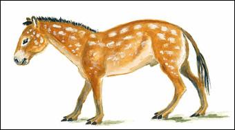 Il y a 50 millions d'années, l'hyracothérium ou eohippus (ancêtre probable du cheval), était 2 fois plus gros que les chevaux d'aujourd'hui :
