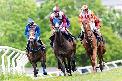Les chevaux de course atteignent des pointes de vitesse de 60km/h :