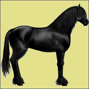 Ce cheval (d'équideow) est un :