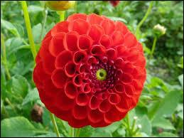 Quel est le nom de cette fleur ?