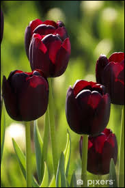 """Quel acteur voit-on dans """"La Tulipe noire"""" ?"""