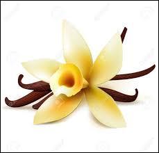De quelle plante vient la vanille ?