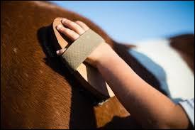 Je dois brosser et m'occuper de mon cheval...