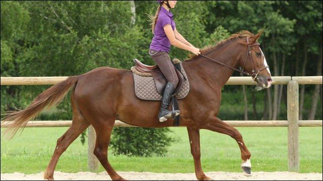 Pour monter un cheval, je ...