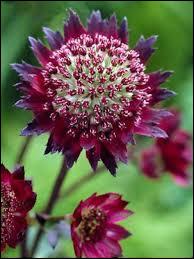 Trouvez le nom de cette fleur !