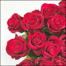 La rose est la fleur du/de/des :
