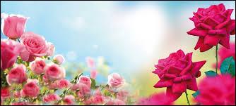 Chez les Grecs, à qui était la rose ?