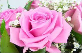 Le jour de la saint Marc, la tradition veut qu'un boccolo (bouton) de rose soit offert aux dames, à :