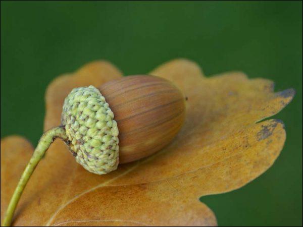 Trouve le nom de cette fable, inspire-toi du nom de ce fruit, si tu ne veux pas finir comme lui !