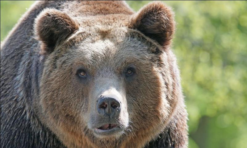 Tu te promènes dans la forêt avec un ami. Vous transportez du miel, un téléphone et vous tombez nez à nez avec un ours ! Ton ami s'approche de l'ours (un peu trop près d'ailleurs), l'ours se retourne, ton ami tombe par terre et l'ours le regarde l'air énervé ! Que décides-tu de faire ?