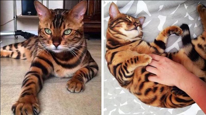 C'est Étoile du Tigre :