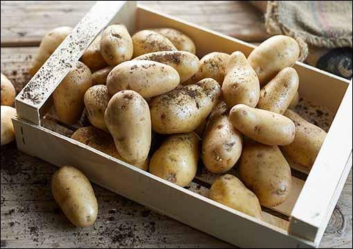 D'après une IGP, d'où viennent les pommes de terre ?