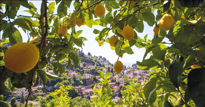 Et enfin laquelle de ces trois villes est surnommée la capitale du citron ?