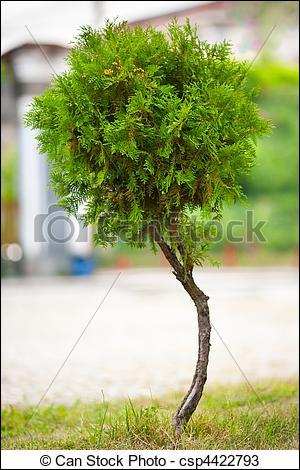 Est-ce un arbre ou une fleur ?