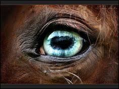 Le cheval a une vision binoculaire de :