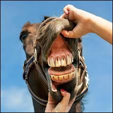 (En comptant les crochets) Combien de dents a un cheval ?