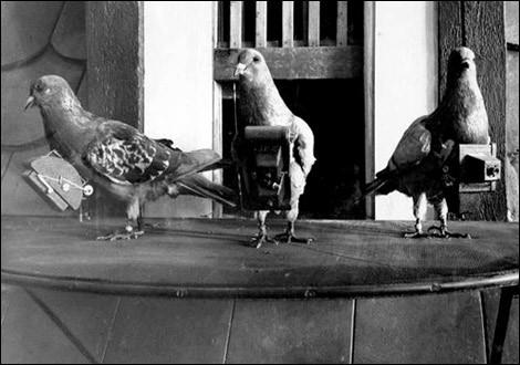 Vous le savez déjà, de nombreux pigeons ont servi de facteurs durant les guerres mondiales. Mais saviez-vous que certains ont été embauchés pour...