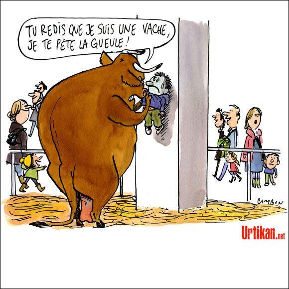 La betizu. Cette vache est un cas, et une exception, c'est la seule vache encore sauvage de France, elle vit dans les Pyrénées, ne ratez pas le lien qui suit votre réponse !