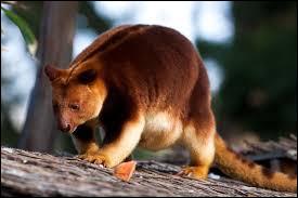 Cet animal assez rare est présent dans ce zoo. Trouvez son nom !