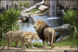 Avec une moyenne d'1,05 million de visiteurs annuels entre 2012 et 2016, ce zoo est le site touristique le plus fréquenté du Centre-Val de Loire.
