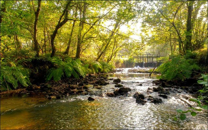 Mais, en tant que dégue... délégué pour vous faire visiter les lieux, pourquoi l'eau des ruisseaux et rivière des Landes de Gascogne prend cette couleur rouille ?