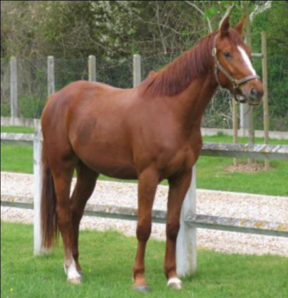 De quelle couleur est le cheval sur la photo ci-dessus ? Il est...