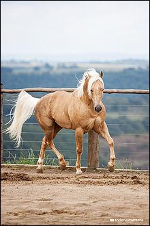 De quelle couleur est le cheval ci-dessus ? Il est...
