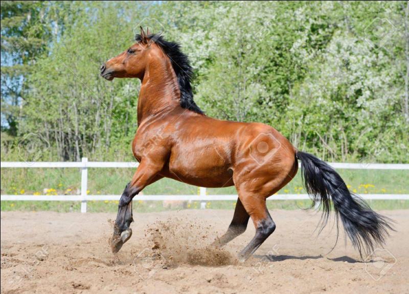 Quelle couleur est le cheval ci-dessus ? Il est...
