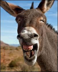 L'âne est-il bête ?