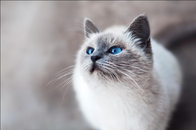 Le chat est très peureux :