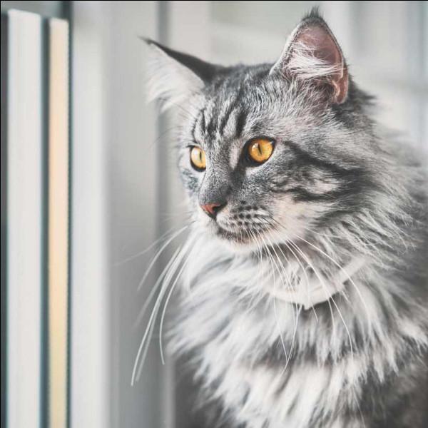 Le chat déteste les câlins :