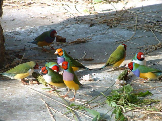 Par quel mot désigne-t-on l'élevage des oiseaux ?
