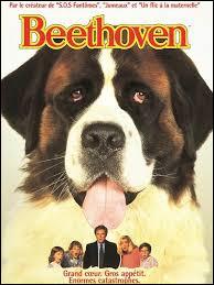 Quelle est la race du célèbre chien de cinéma Beethoven ?